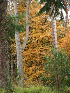Woodland walk Culzean