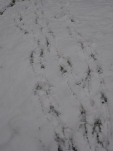Making tracks to the Kitchen