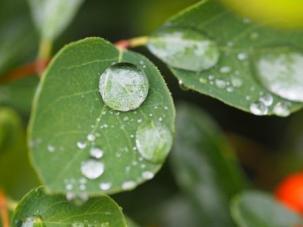 Raindrop jewels