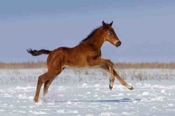 realistic horse breeds # 23