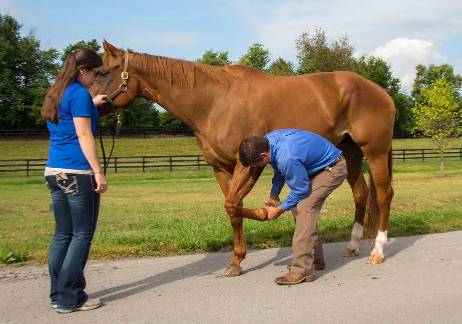 Tackling Tendon And Ligament Injuries The Horse