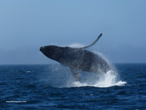 Port McNeill Whale Watching