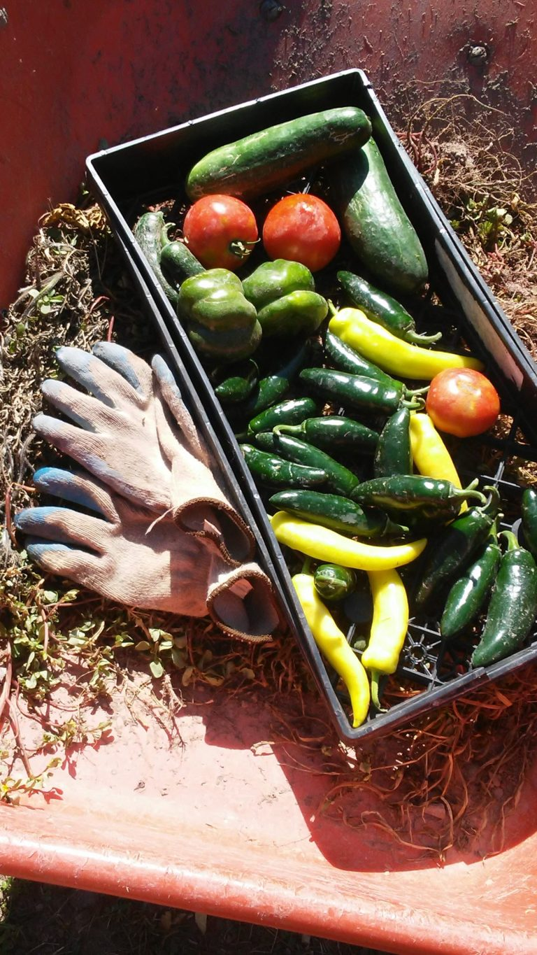 integrated pest management, garden produce and gloves