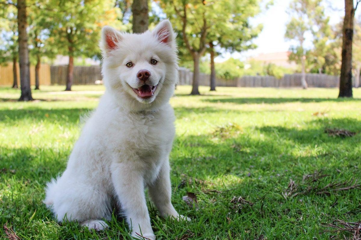 Alternative flea treatments for dogs