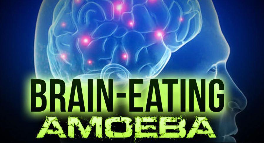 Brain-eating Amoeba, brain