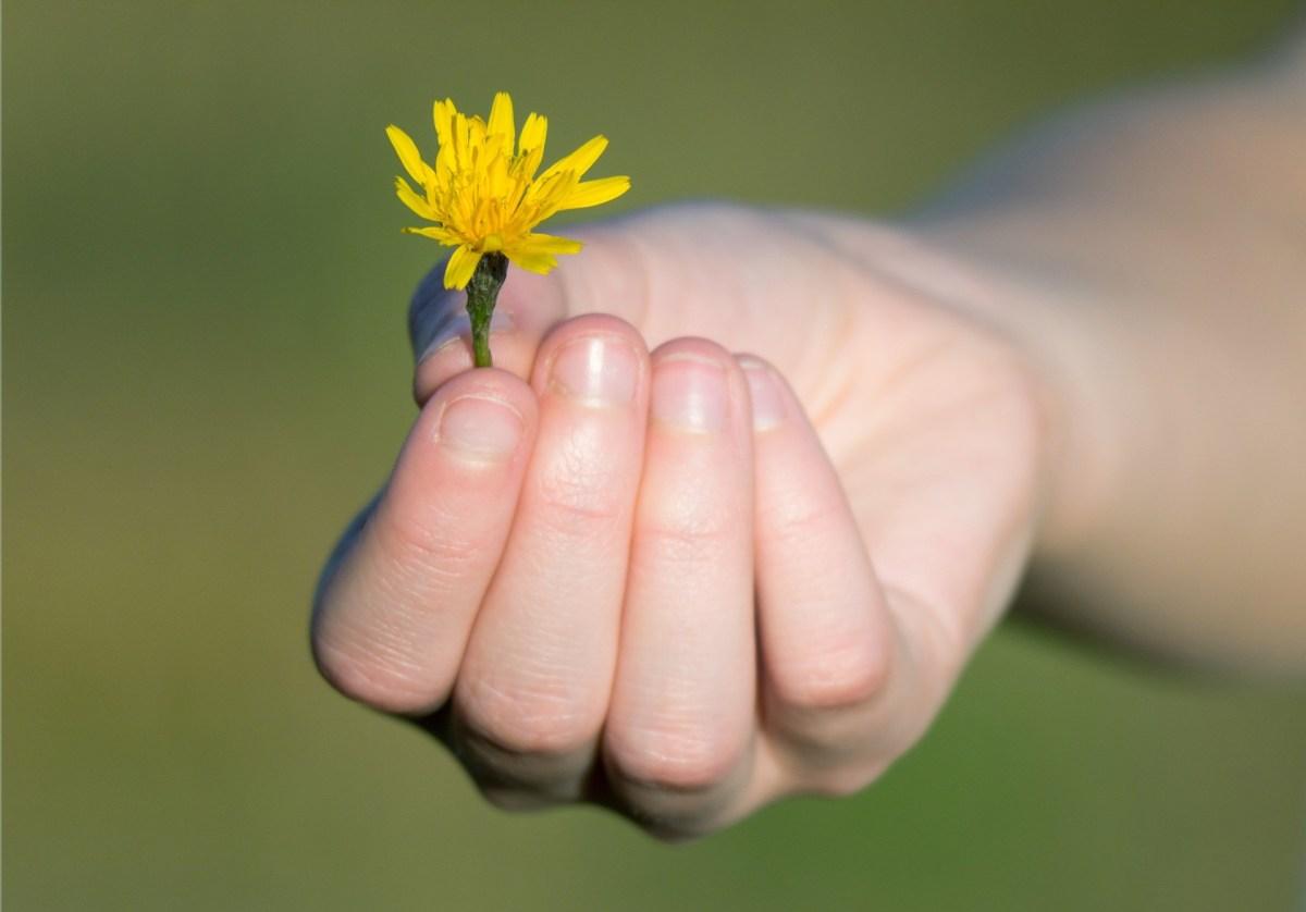 Hand, flower