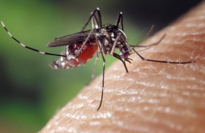 Mosquito, sting