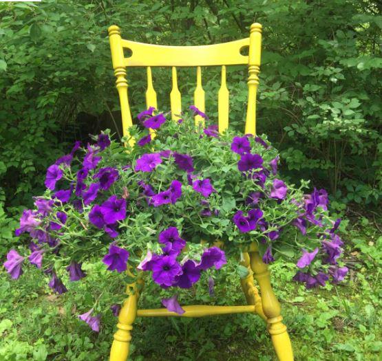 Wooden chair, pot plant