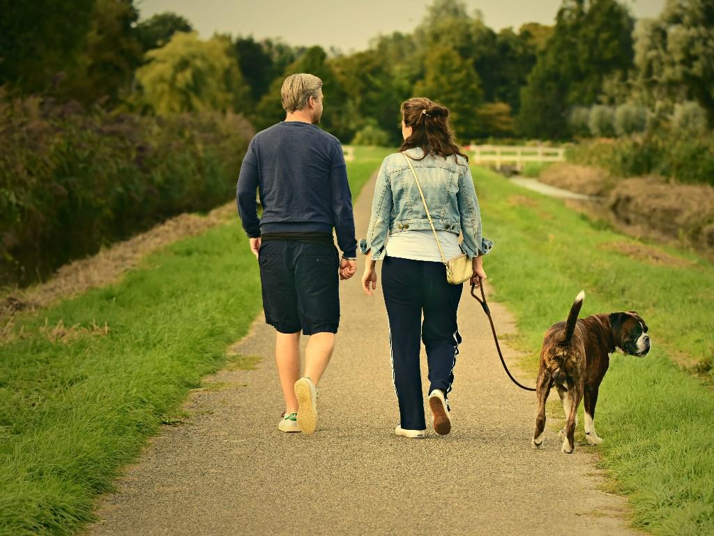 Morning, couple walking with dog