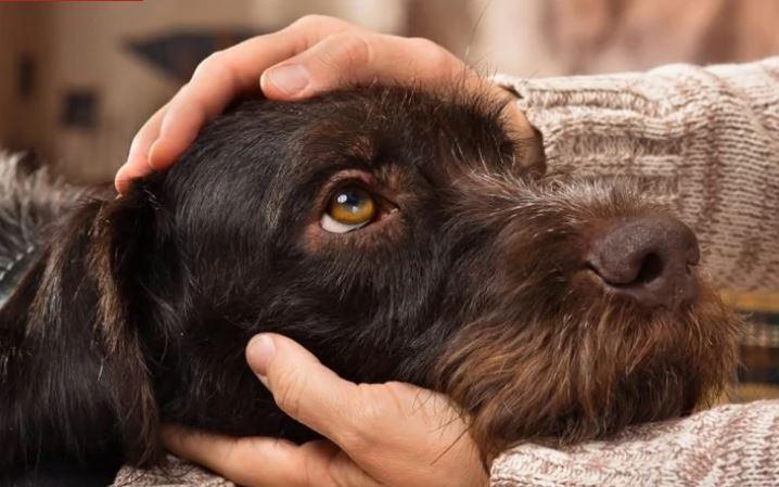 Health benefits, hand petting dog