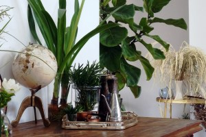 Indoor plants __ The Hot Mess Press