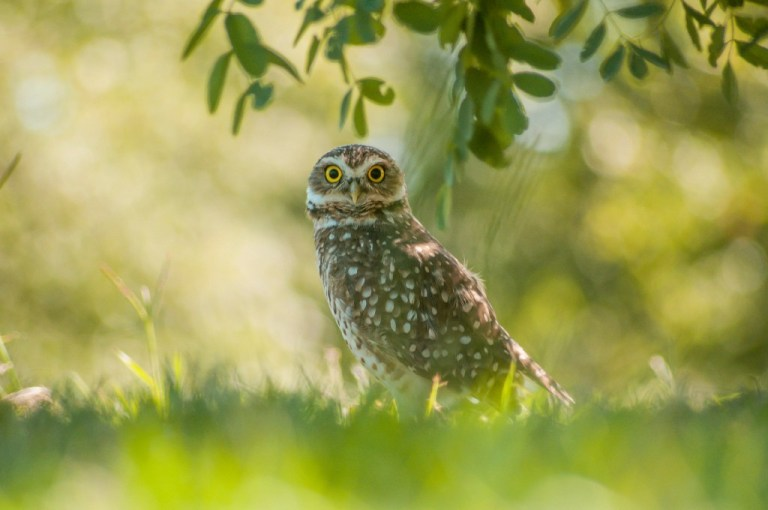 Owls in Nature --The Hot Mess Press