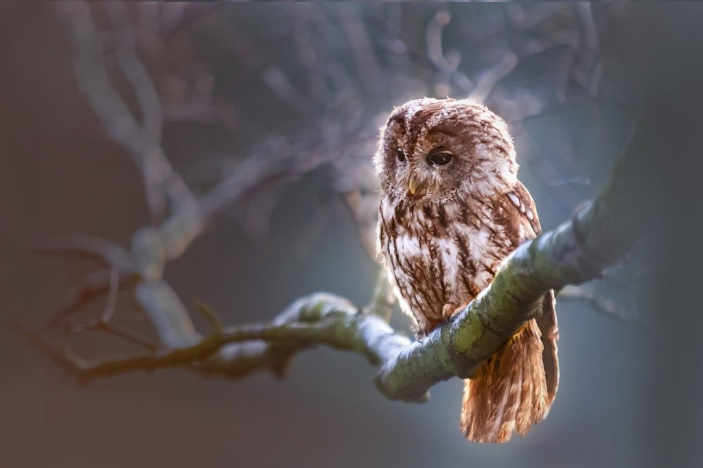 Owls perch in tree