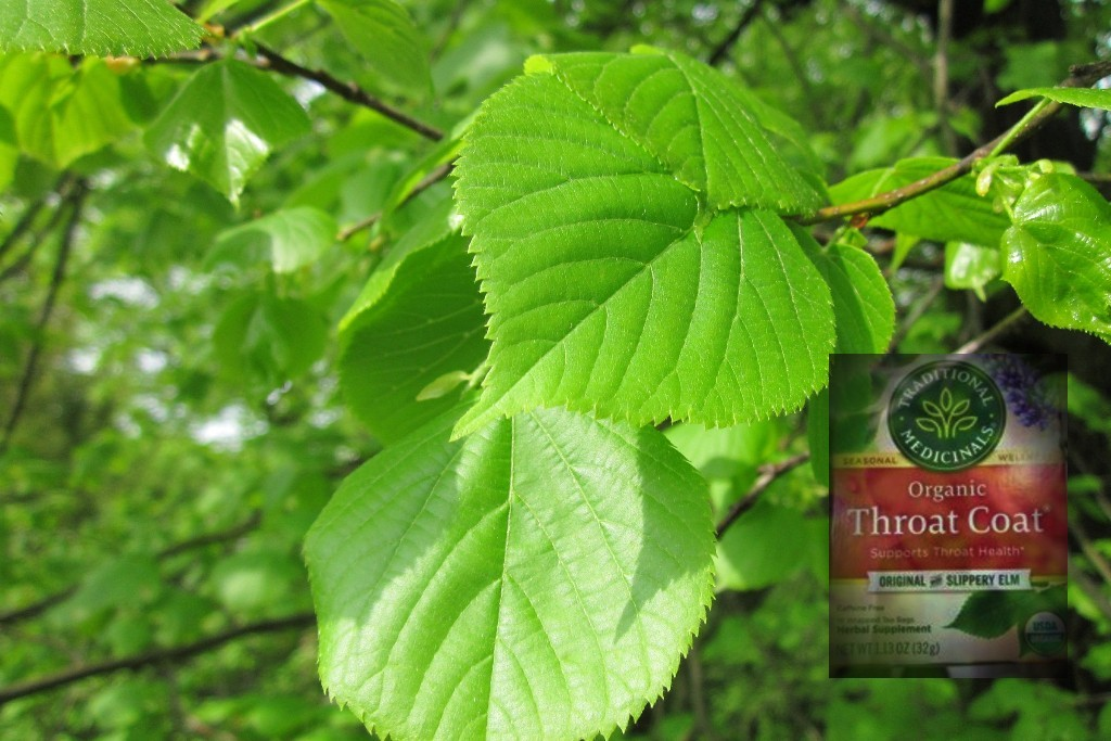 Natural Remedy Elm Tree leaves