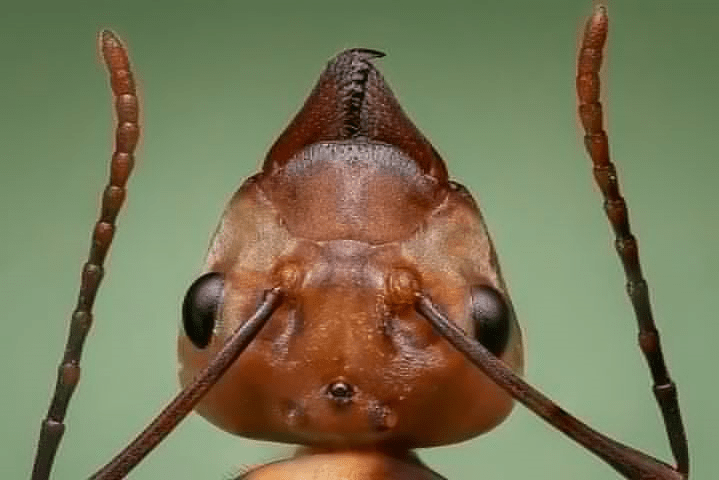 obscure facts, magnified view of ant head