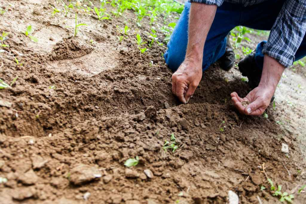 man's arms and hands shown planting seeds in soil