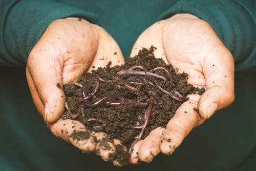 outstretched hands full of soil and worms