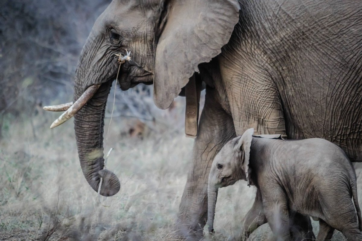 Mother and child elephants