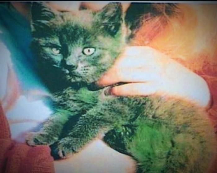 Danish Cat with Green Fur