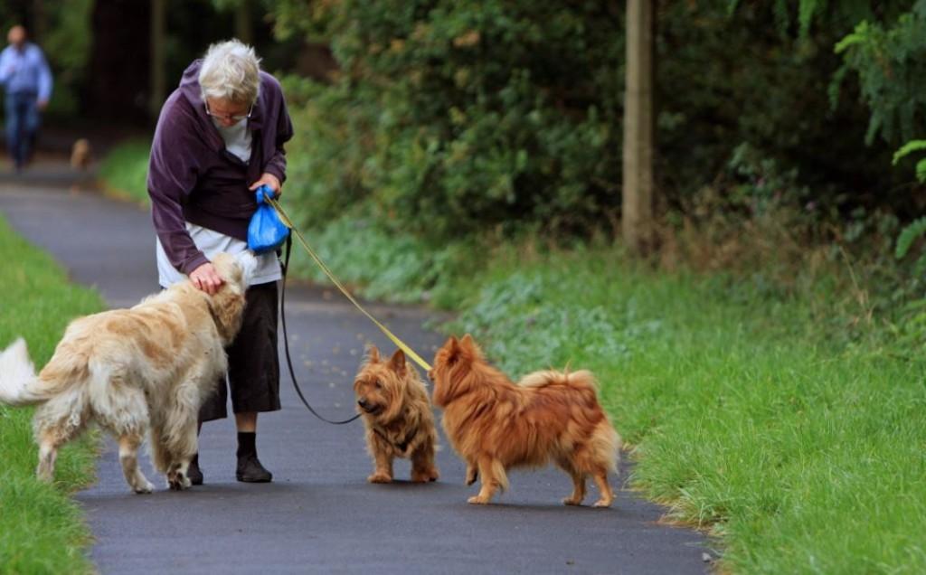 Jealousy woman walking dog