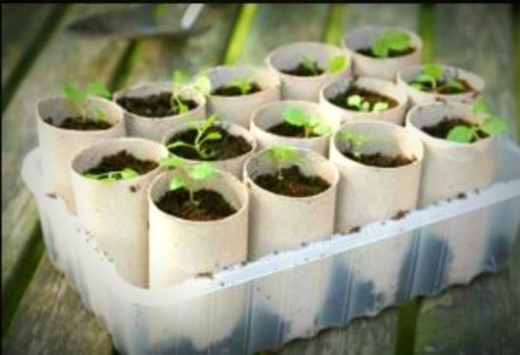 Seeds in Cardboard tubes