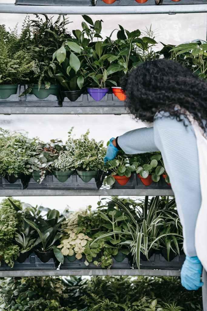 companion planting, woman wearing blue glove reaching toward plants on a shelf