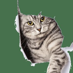 Pets - cat -- The Hot Mess Press