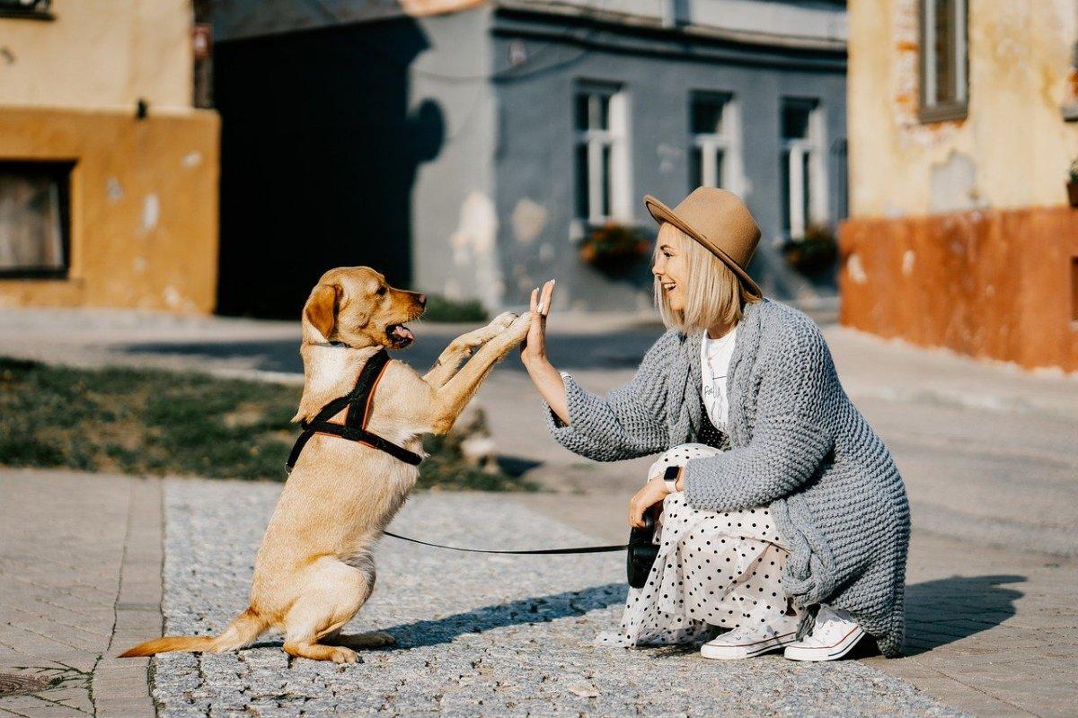 Pets need praise