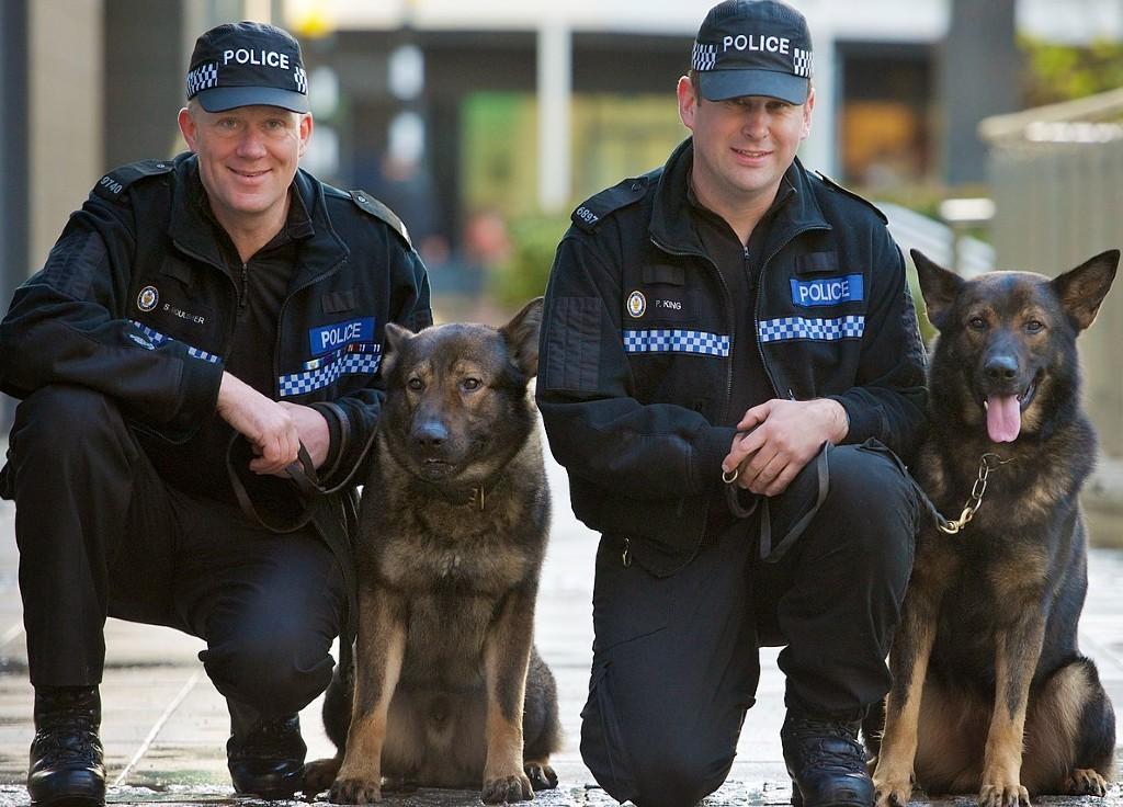 Working dog Law enforcement