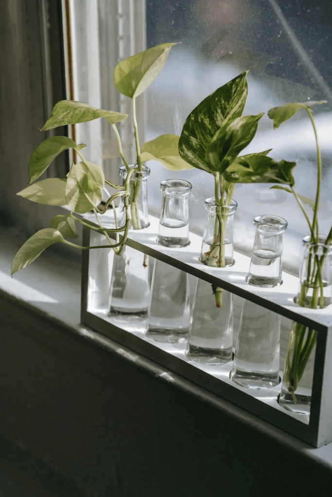 expand your garden, row of plant cuttings in vials of water