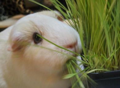 Teddy & grass