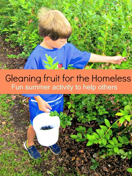 Gleaning Blueberries for the Homeless - a fun way to serve with your kids this summer