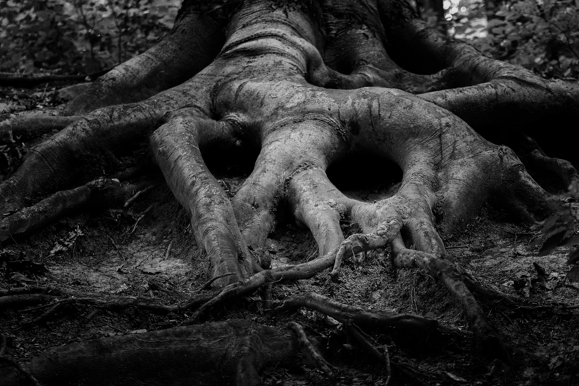Knelt at the Bone-Mother's Altar: The Grotesque Beauty of a Witch's Becoming