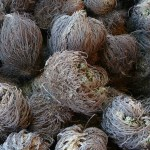resurrection plant jericho rose the house of twigs fertility magick witchcraft