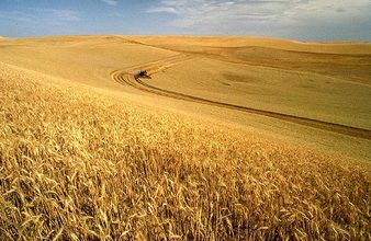 Ingredients Matter: Understanding the Many Types of Wheat