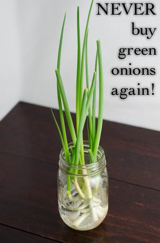 Never Buy Green Onions Again.jpg
