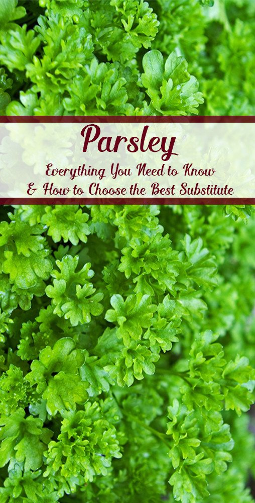 Parsley: everything you need to know and how to choose the best substitute.