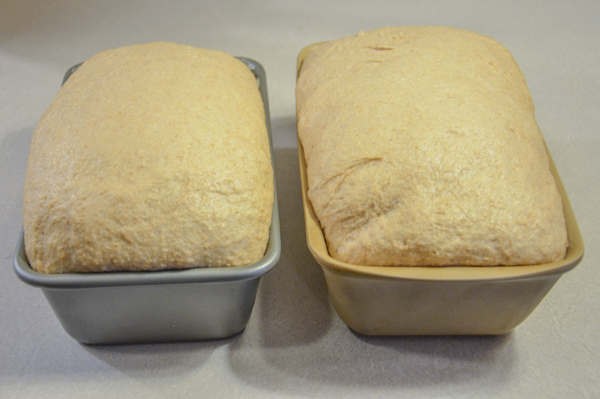 After second rise, ready to go into hot oven.