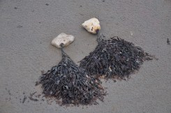 Bearded stones, with fans of seaweed.
