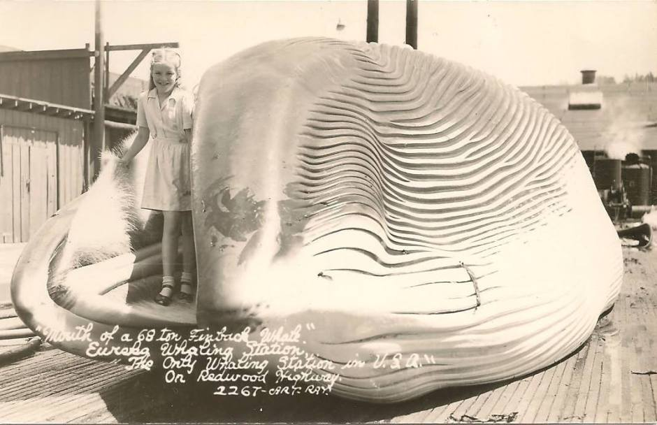 whaling6