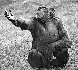 The Body Language of Bonobos and the Evolution of Human Language