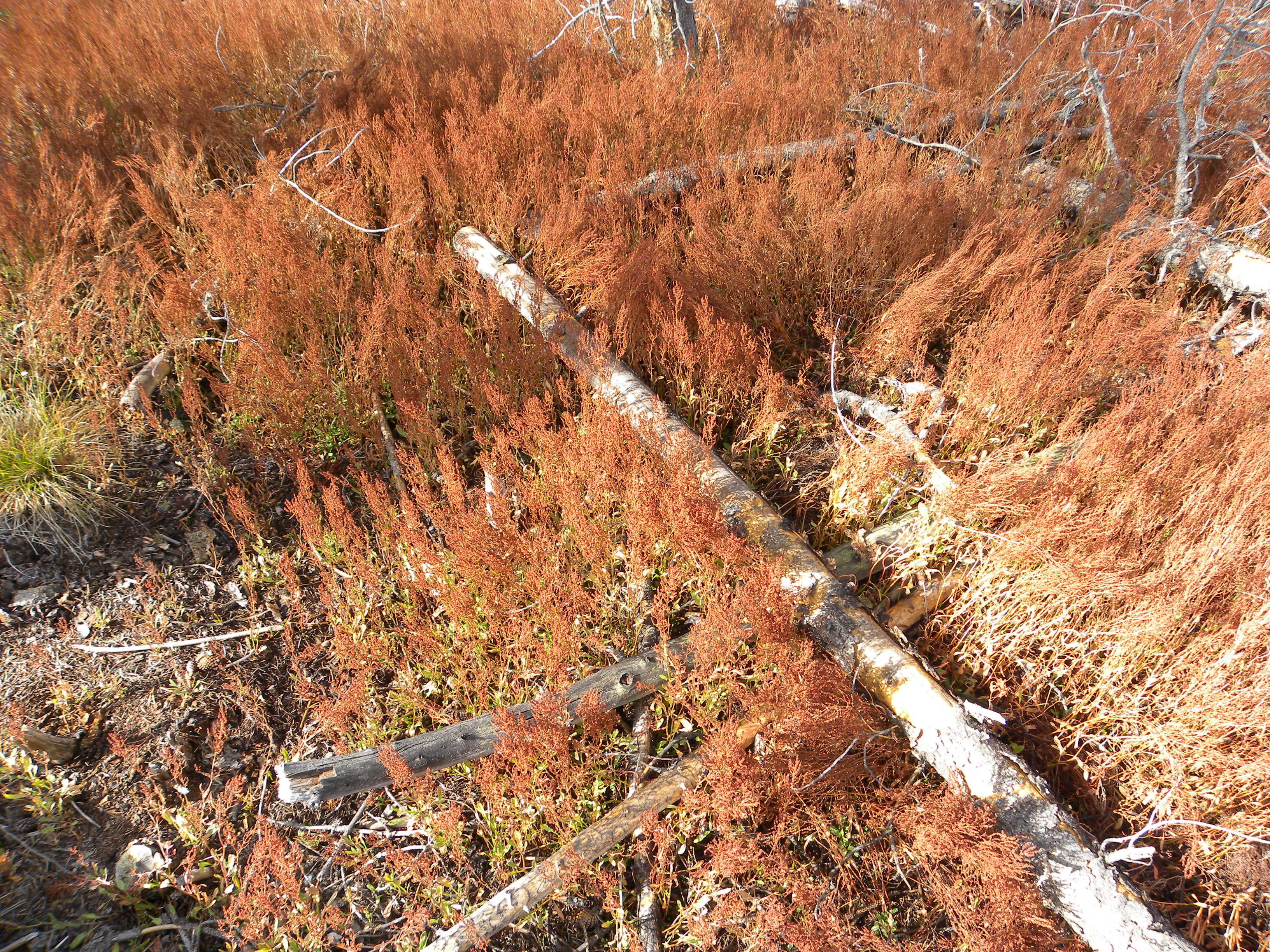 Hot springs plants in fall color