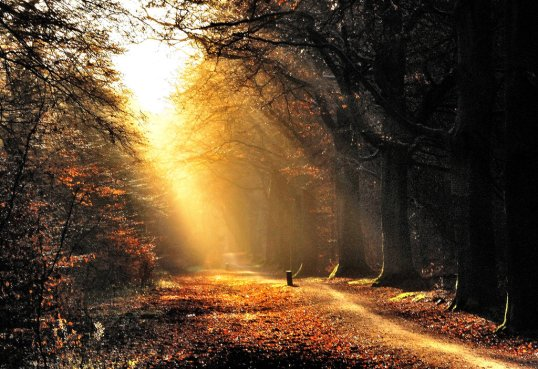 cycling_towards_the_morning_light_by_jchanders-d8e362v