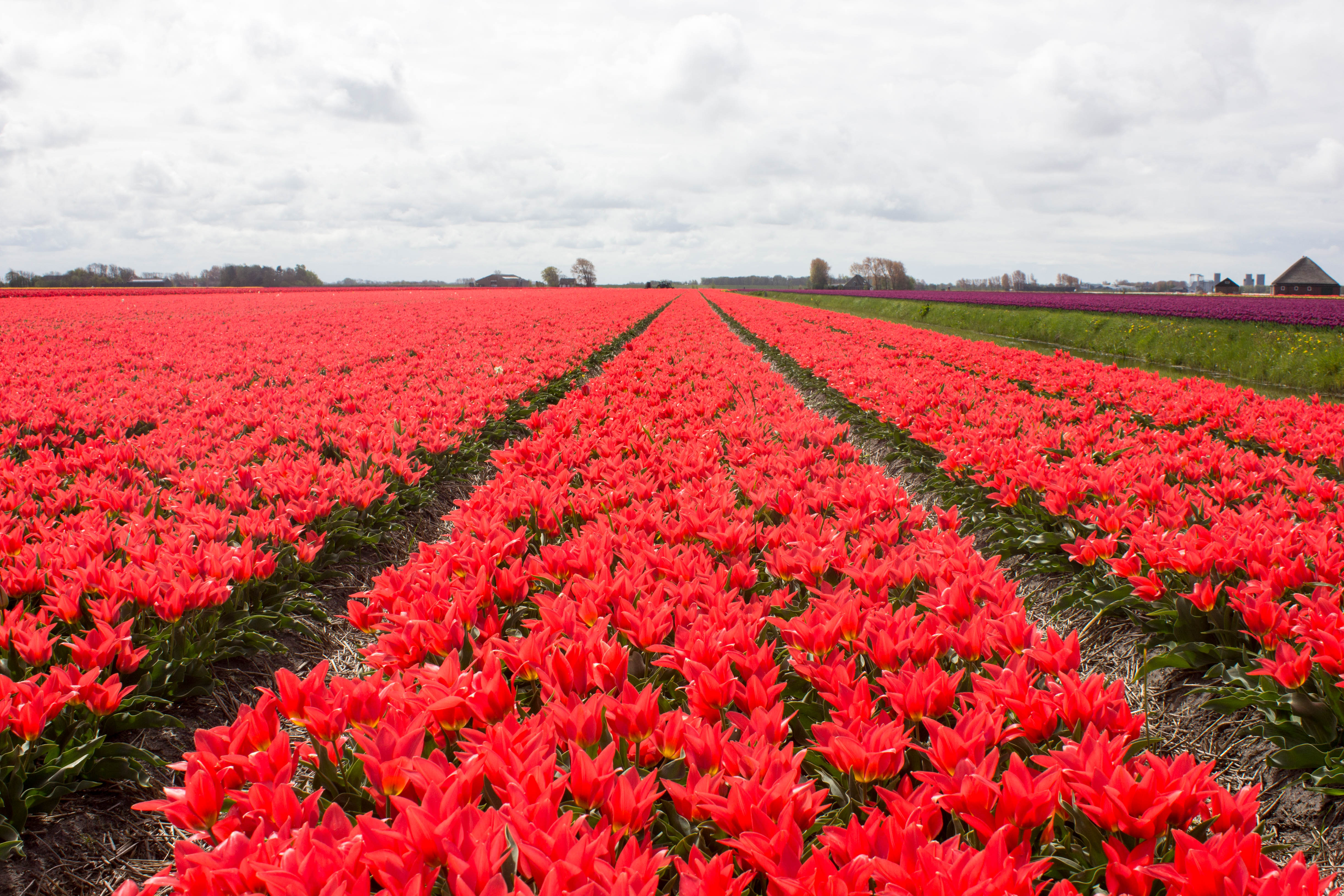 See the World: Our Dutch Tulip Trip