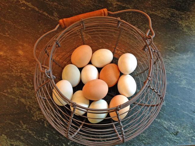backyard-chicken-eggs-jason-price-seattle