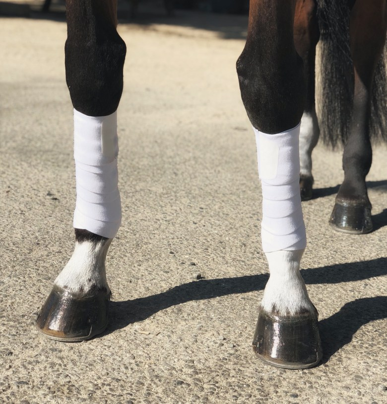 EyeOn Equine Care Far Infrared Wraps