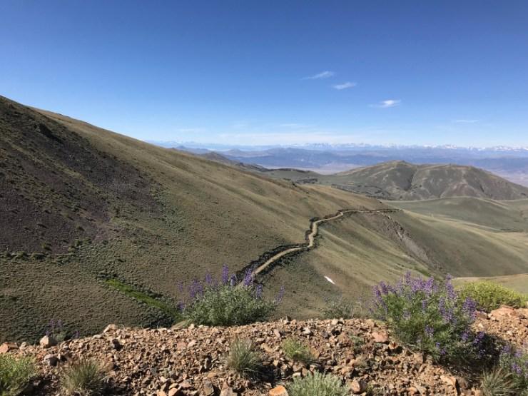Mount Grant Road