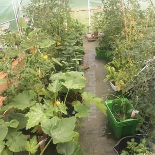 Økologisk kjøkkenhage