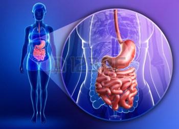 fordøyelsen, microbiota. probiotika og prebiotika.