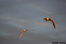 3) birds